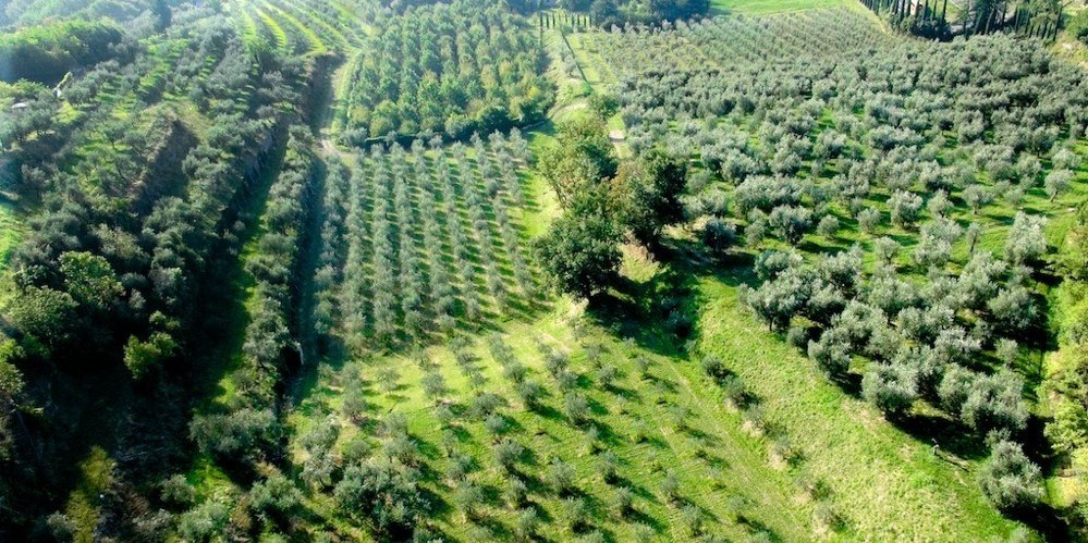 The Olive Farm | Paolo Bonomelli Olive Farm -Lake Garda